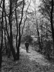 man-walking-on-path-in-forest